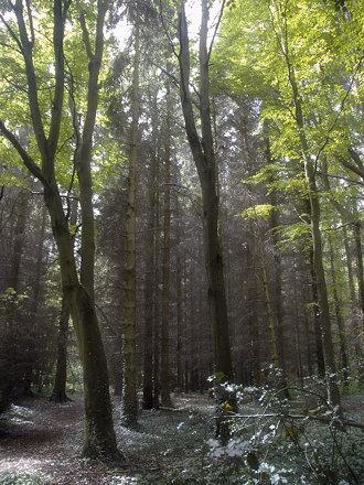 Gifford Wood