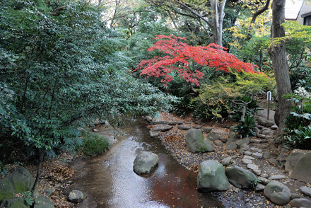 Red Maple Leaves over a Stream in Nanushi-no-taki Park