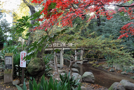 Wooden Bridge and Red Maple Leaves in Nanushi-no-taki Park