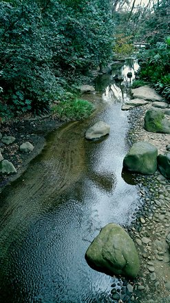 Water Nature Park Stream